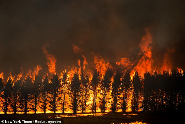 The Dunns Road Fire crowns the tops of a trees close near Maragle, Australia on Friday, Jan. 10.The relentlessness of the blazes is increasingly pushing Australia beyond crisis mode into anger and fatigue