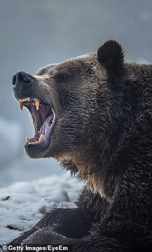 Canadians are universally sanguine about bears but even the ones that weigh 100 stone can move faster than the most fleet of foot among us