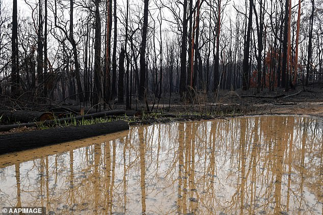 Bushland is seen burnt by fire as rain pools in large puddles at Bilpin, in the Blue Mountains, following torrential rain