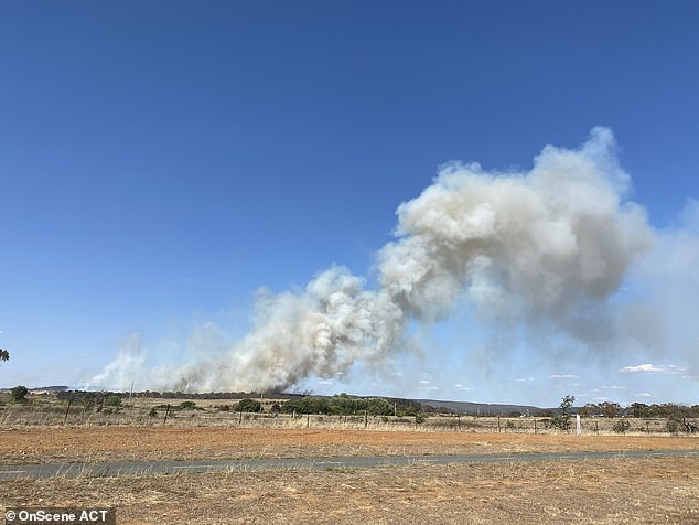 The fire has burned about 100ha in the Pialligo Redwood Forest on the border of the ACT and NSW, near Canberra Airport