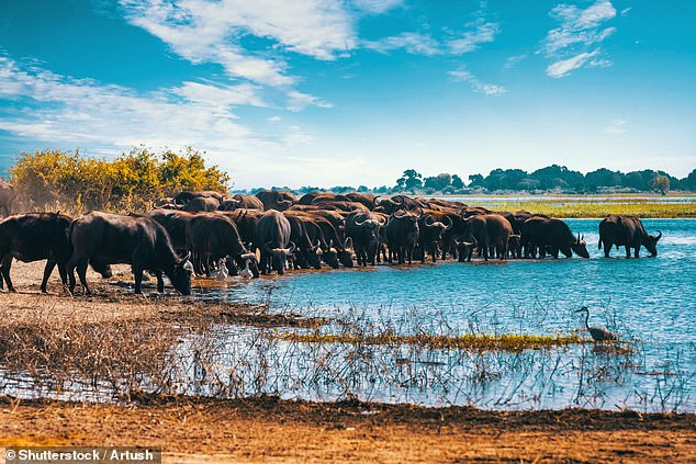 Botswana's Chobe River, pictured, where hippos, elephants, birdlife, antelope and the big cats all come together for crossings, drinking and hunting