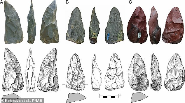 Stone tools found in a cave in Siberia reveal that nomadic Neanderthals made an epic trek of more than 1,800 miles from eastern Europe around 59,000 years ago. Pictured, theMicoquian-style tools unearthed fromChagyrskaya Cave in the Altai foothills