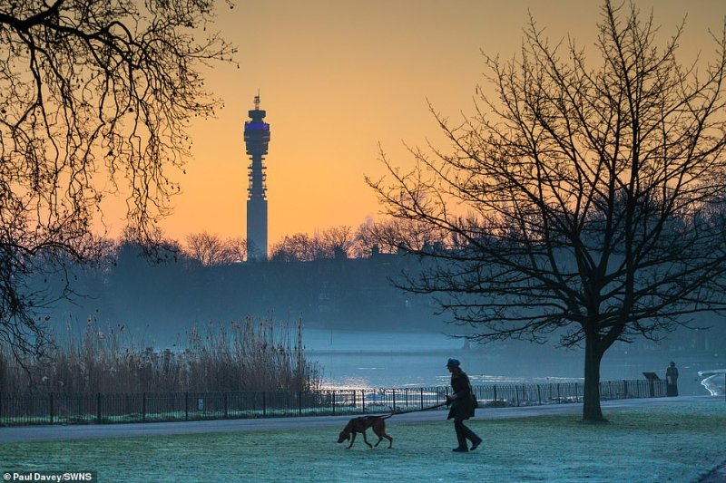 The BT Tower is pictured in the background as a woman walks her dog across the frosty grass in London's Regent's Park today