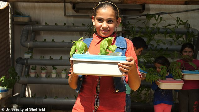 The team have been able to grow a range of herbs and vegetables in discarded boxes and using old foam mattresses including basil as seen here held by a young refugee girl