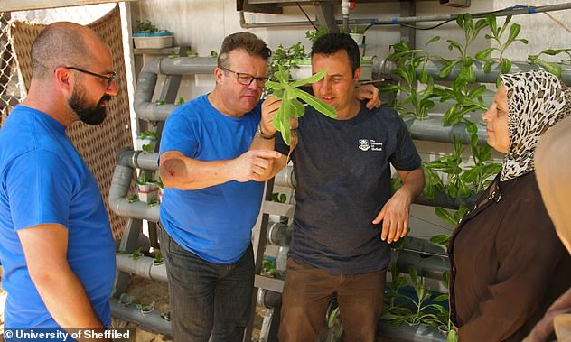 Professor Ryan and Professor Cameron are working with others to train refugees on how to make use of their technique to grow their own plants