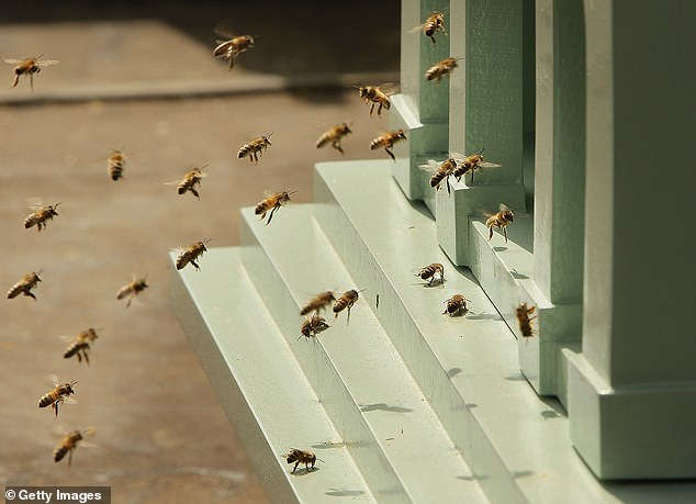 The bees were able to communicate a range of information just by shaking their rears, including indicating when to turn, how far away a source of pollen was, and what general quality the pollen source would be