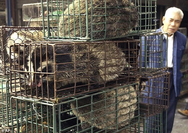 China passed new legislation this week to ban all trade and consumption of wild animals. In the file photo above, a man looks at caged civet cats in a wildlife market in Guangzhou on January 4, 2004. The cat-like creatures triggered the SARS outbreak in 2003