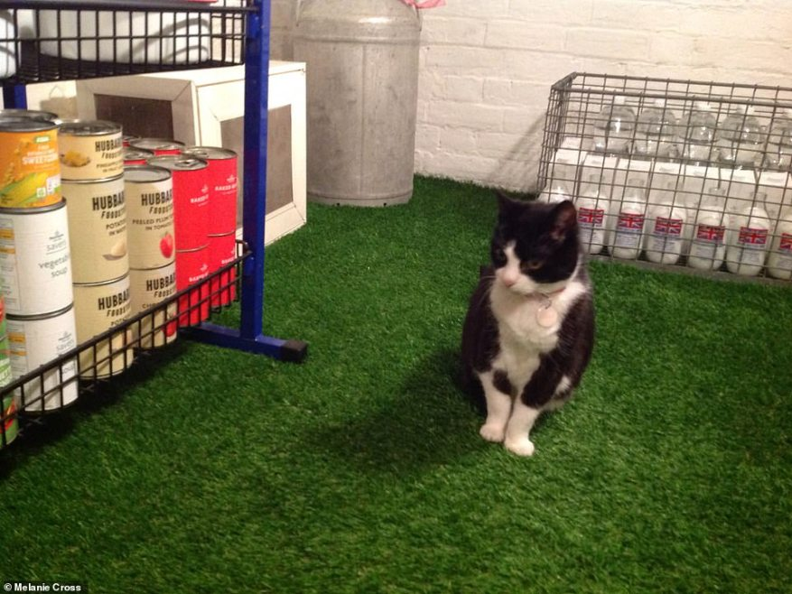 Beegee stands next to stockpiled stores including cat food with its owner Melanie saying: ' Don't forget the animals!'