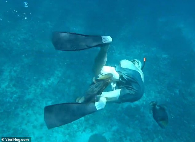 Two triggerfish attacked the divers off the coast of Nusa Penida island near Bali, Indonesia