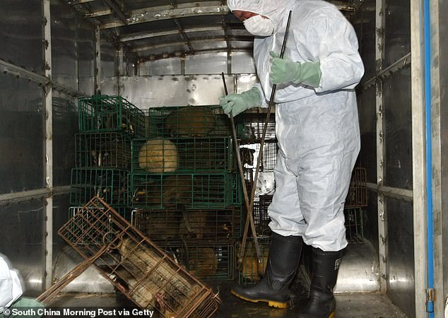 The law forbids the consumption of all wild animals on land as well as endangered and protected wild aquatic species. In the file photo taken on January 5, 2004, workers collect civets in Xinyuan wildlife market to prevent a possible spread of SARS in Guangzhou