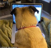People Forced to Work from Home Because of Coronavirus Share Funny Photos of their Pet Dogs 'Working with Them'