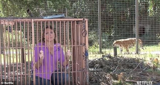 И хотя основатель и генеральный директор Big Cat Rescue «разочарован» этим «непристойным и сенсационным» фильмом, она ценит то, как он «попал в аудиторию, которая не имела ни малейшего представления о придорожных зоопарках, и, надеюсь, теперь увидит зловещий живот этого эксплуататорского и оскорбительного бизнеса». '