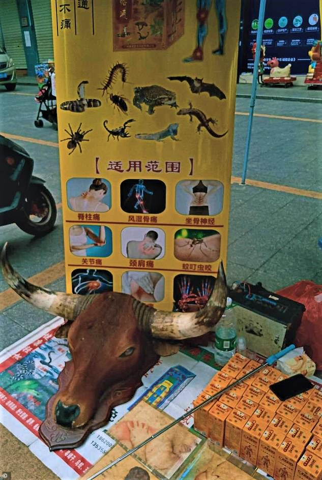 A traditional medicine stall at Dongguan market in southern China advertising bats and other wild animals such as lizards and scorpions as legitimate remedies for common ailments