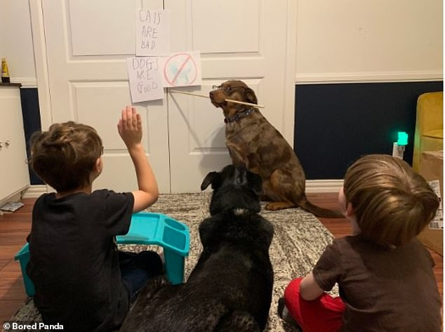 Outsourcing the home-schooling: This American mother admitted that she's now letting her pet dog teach her young children