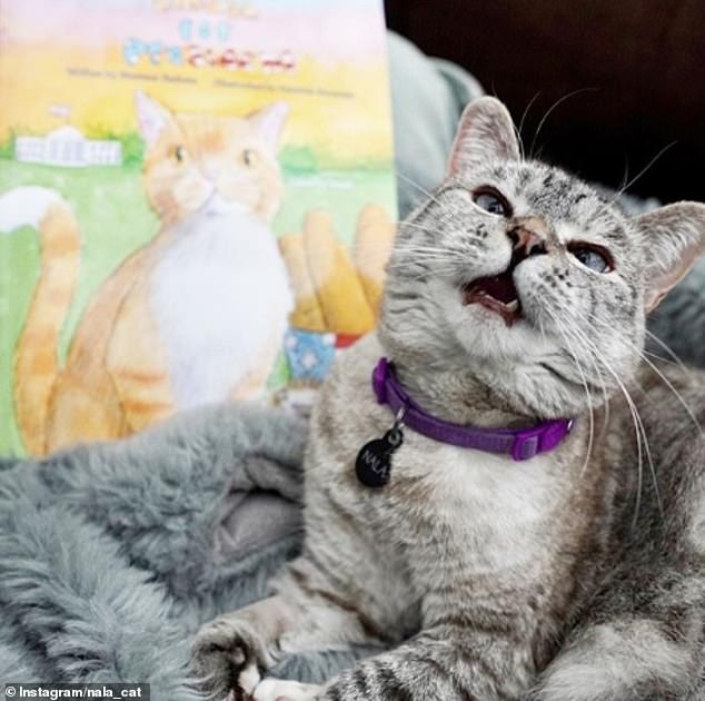 Here, kitty! Nala Cat , who was rescued from a shelter by her owner, has 4.3 million followers on Instagram