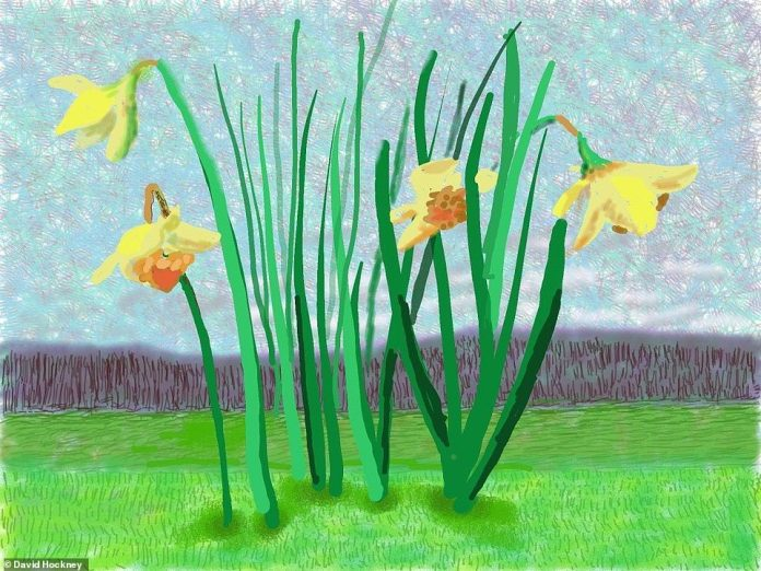 One of the paintings, shown above, feature bright yellow daffodils in front of a gloomy, grey mass, reflecting a splash of colour being added to the dark times faced around the globe during the ongoing pandemic.The painting is aptly titled 'Do Remember They Can't Cancel the Spring' - Hockney previously sent the drawing to one of his friends while it was in progress
