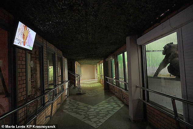 An empty corridor in the Royev Ruchey zoo, which was closed to visitors due to the pandemic