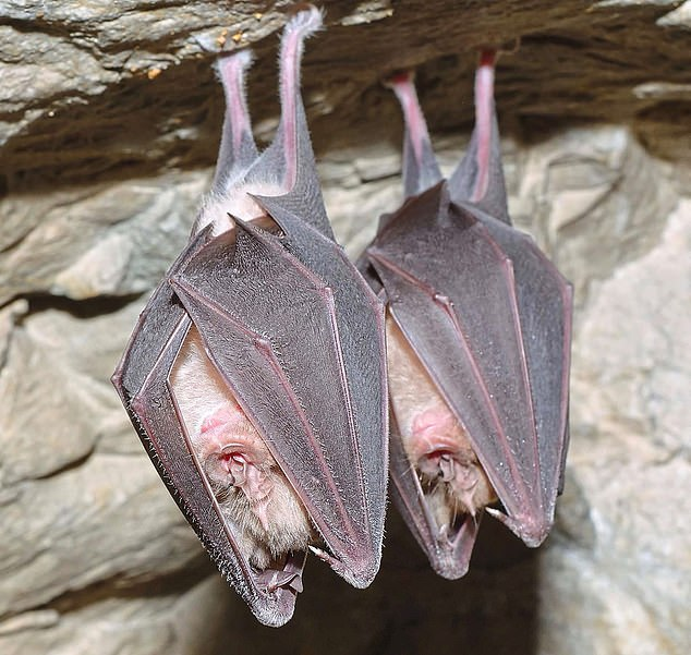 Bats have been linked with seven major epidemics over the past three decades