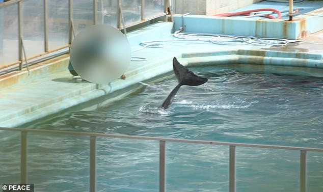She first made headlines around the world after it emerged she had been abandoned in the aquarium along with 46 penguins since January 2018