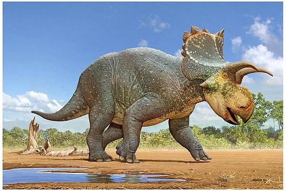 Artist's impression of Crittendenceratops krzyzanowskii, a ceratopsid dinosaur from 73-million-year-old (Late Cretaceous) rocks in southern Arizona