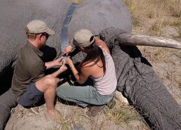 Meghan and Harry in Botswana in the summer of 2017.  According to Finding Freedom, the 'Duke and Duchess of Sussex' became secretly engaged in August 2017.