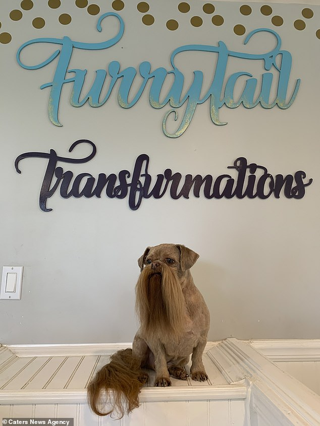 Where the magic happens: at the Furrytail grooming parlour, where Max's beard is trimmed