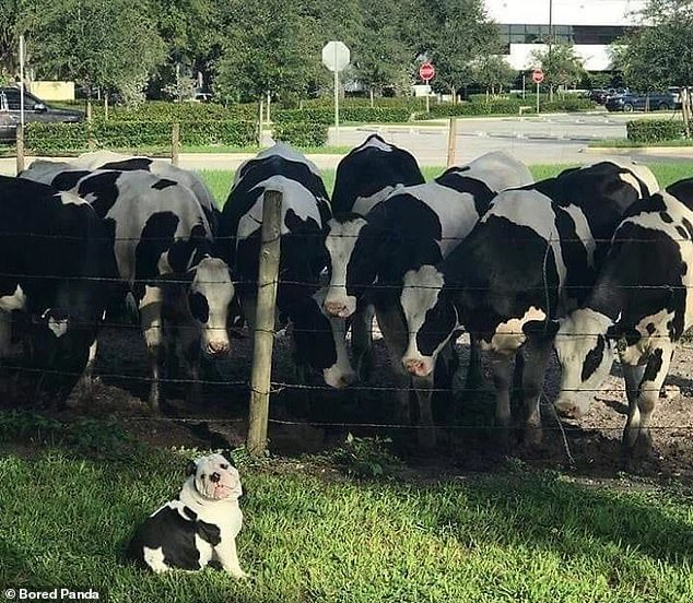 He's found his people! This pupper looked delighted to have found cowd with the same hair as him
