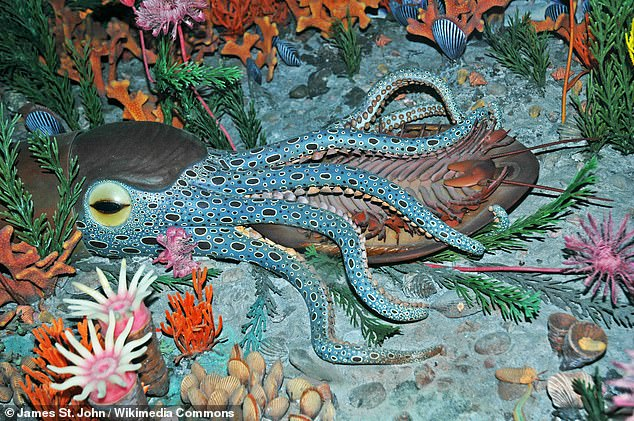 A model of a Cincinnatian seafloor during the Late Ordovician period shows a nautiloid eating an Isotelus trilobite