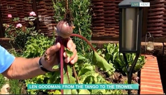 Oh my! The 76-year-old get a tad smutty when showing off his prized gourds