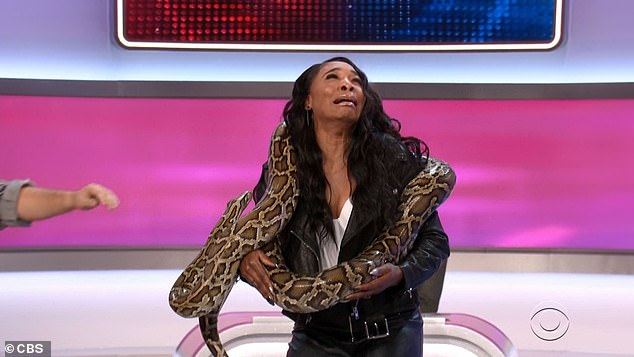 In hair:She screamed again when the snake slid its head into her hair, shaking but trying to look calm