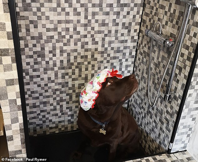 dog owner builds 90 shower for his