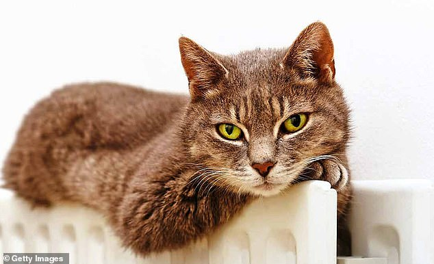 For far too long dogs have got all the credit for being man¿s best friend. But it turns out that it is cats who can be the purr-fect (sorry!) companion [File photo]