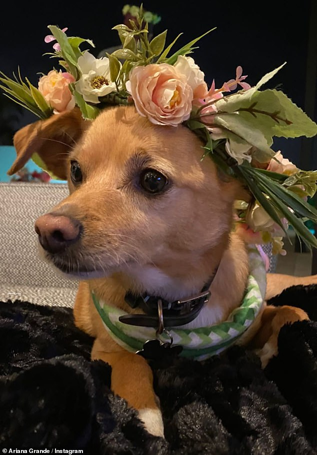 Part of the family: Ariana's pets even participated in the festivities and she shared a cute close-up of one of her dogs with her own modest wreath