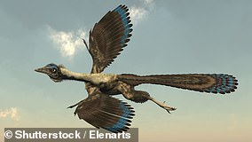 Archaeopteryx in flight, pictured