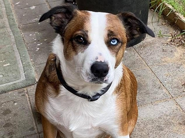 Sprocket the dog (pictured) was at the centre of an ongoing neighbourhood dispute, which spiralled out of control at an 80th birthday party last year