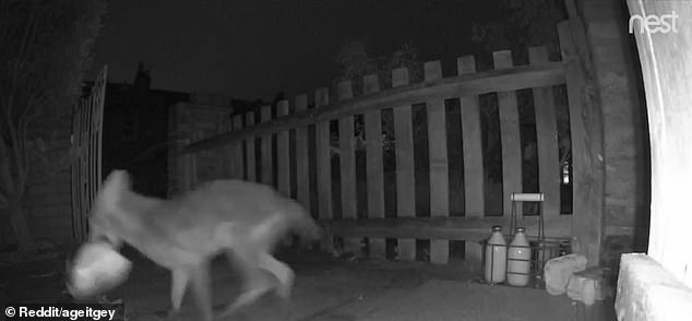 The fox stole the loaf of bread from the doorstep in west London around 1.20am