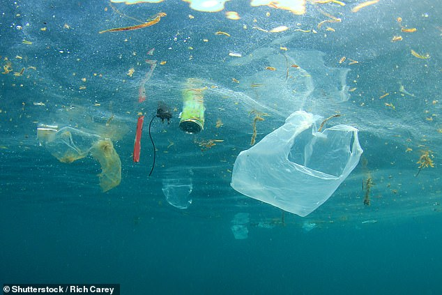 Bacteria will grow on any surface in the ocean, which is one way it may be spread around the world, warns a study in the journal Marine Pollution Bulletin. Filling the ocean with plastics creates billions of new habitats [File photo]