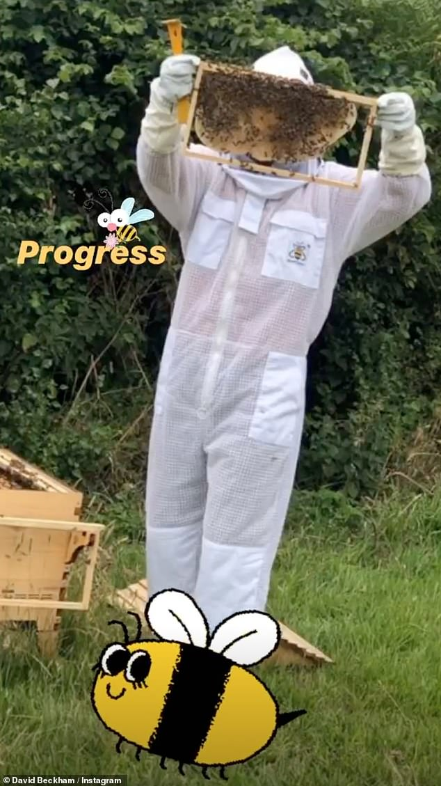 Success!David Beckham appeared to be getting to grips with country living on Monday, as he shared snaps of himself collecting honey from a beehive in his garden