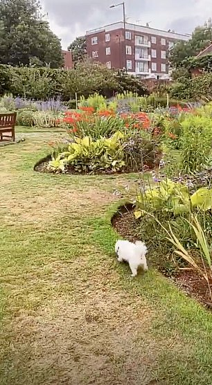 Doggie walk: After their lunch, they took Mick for a walk in the gardens