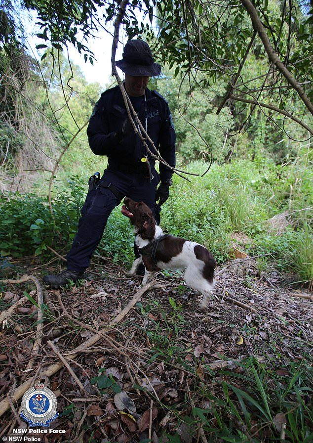 Police brought in sniffer dogs and rescue specialists to scour the bush around Byron Bay on Tuesday