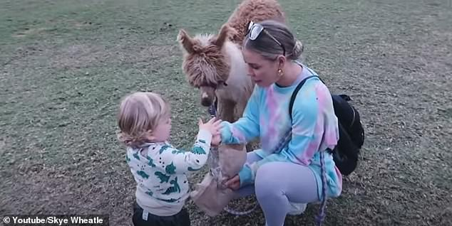 Feeding time: After arriving at the alpaca farm, Skye and Lachlan bought a bag of food to feed the animals, and even took one for a walk on a leash. Pictured with son Forest