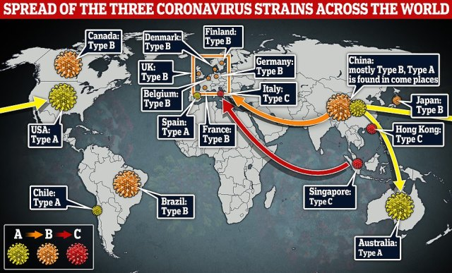 The map above shows how the three strains identified by Cambridge University scientists traveled around the world