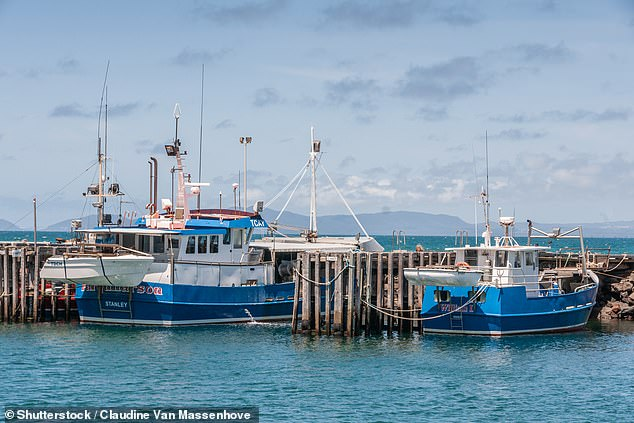 The family were fishing off Stanley on Tasmania's north west coast when tragedy struck (stock image of fishing boats at Stanley)