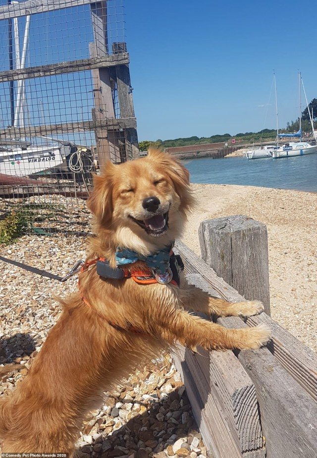 You looking at me? Dean Pollard's 'Super Happy Dog' shows a cheerful golden retriever posing up against a fence at Hill Head Beach in Fareham. Photographer Dean said: 'Taz, our rescue dog from Cyprus was super happy on a sunny day and clearly delighted to be at the beach'