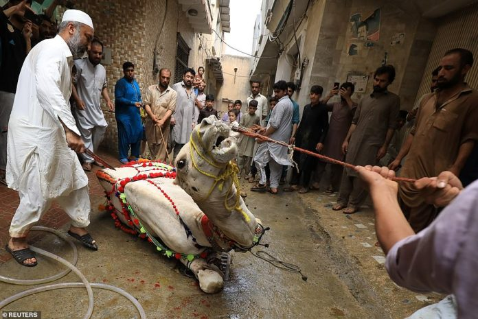 Men gather to slaughter camel for Eid al-Adha in Peshawar, Pakistan
