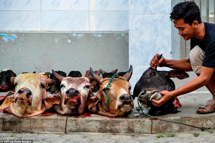 Man checks head of cow after slaughtering it during Eid al-Adha sacrificial festival in Banda Aceh