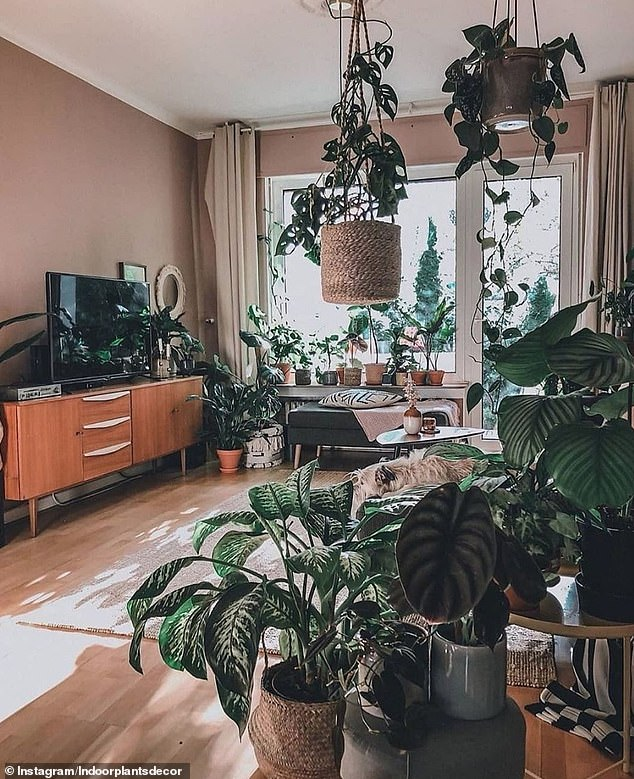 4. PLANTS: Instagram account Indoor Plants Decor, dedicated to revealing the very best home jungle, revealed this example of a home decorated with multiple plants