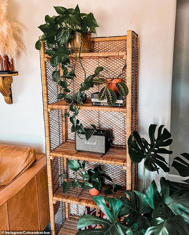 10. WICKER FURNITURE: Vintage goods store Côte & Co shared their brown wicker shelf, decorated with various house plants