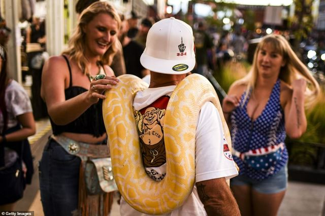 A man carries his pet snake along Main Street during the 80th Annual Sturgis Motorcycle Rally