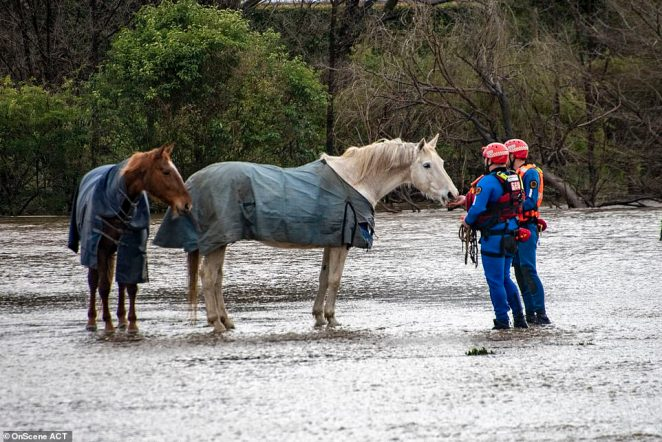 Horses had to be rescued from a paddock which was drenched in the downpour